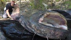 Pêche au Silure : Les atouts du MEGA DOWN IMAGING