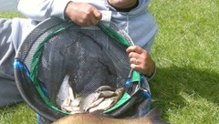 Les brèmes ont la pêche !